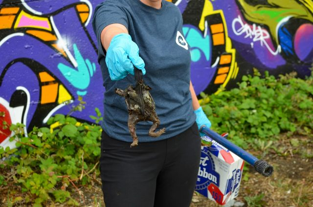 carmanah community cleanup finding a frog coin purse